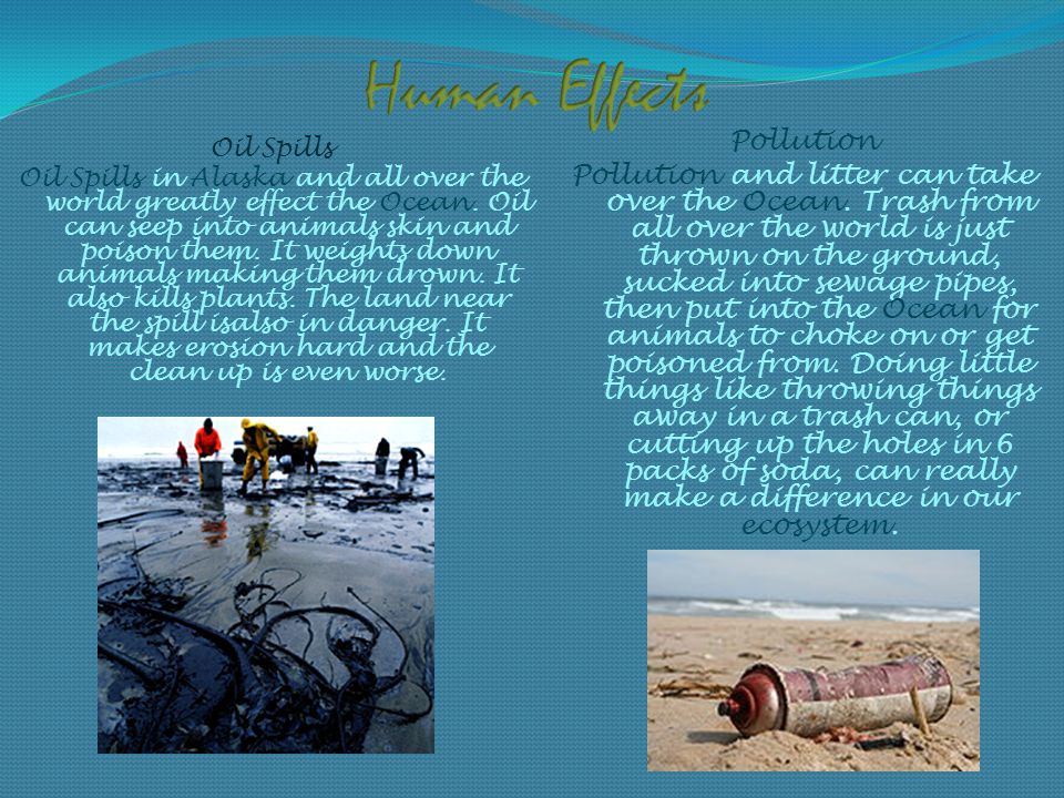 Oil Spills Oil Spills in Alaska and all over the world greatly effect the Ocean.