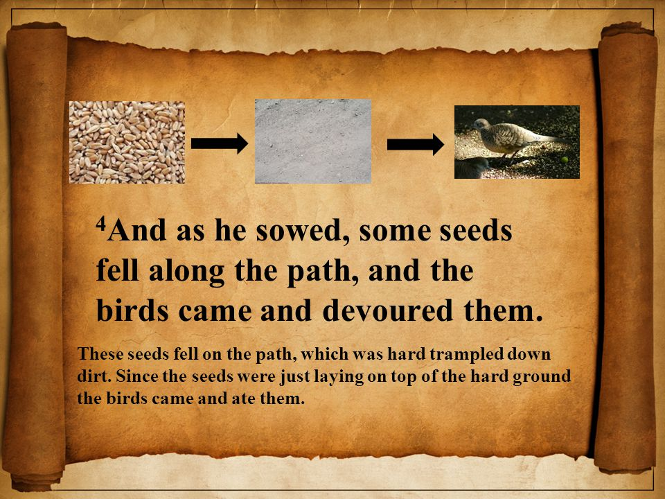 4 And as he sowed, some seeds fell along the path, and the birds came and devoured them.