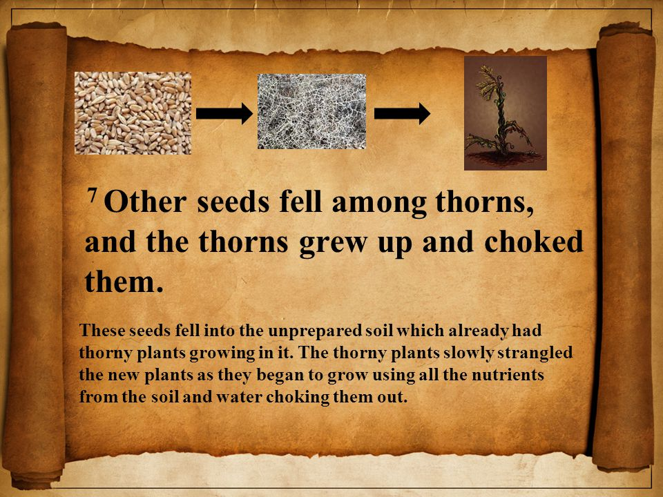 7 Other seeds fell among thorns, and the thorns grew up and choked them.