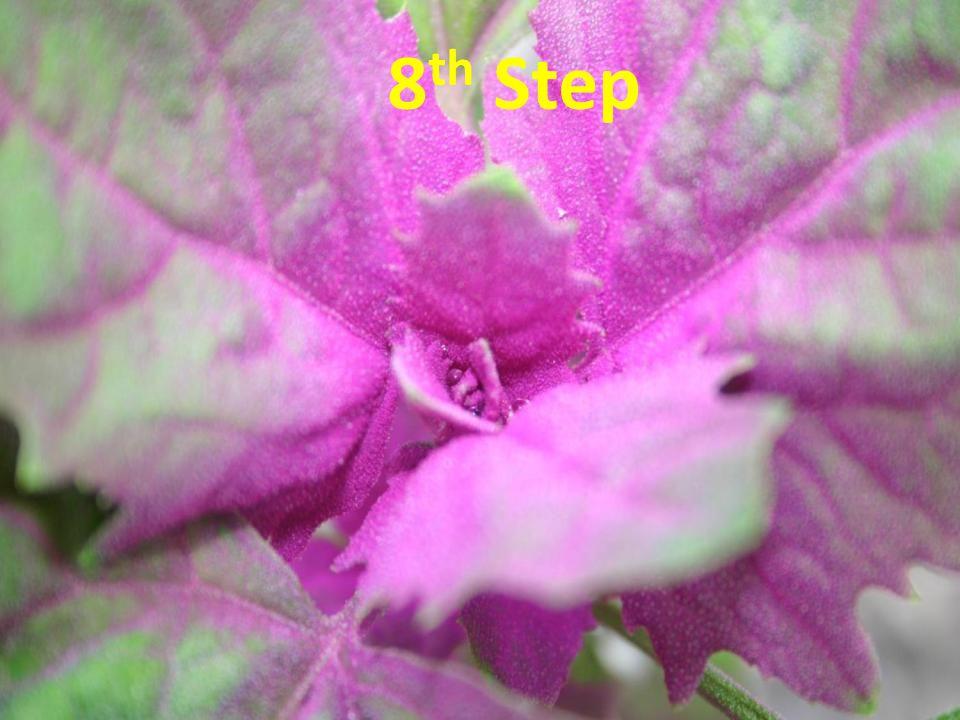 9 th Step 8 th Step