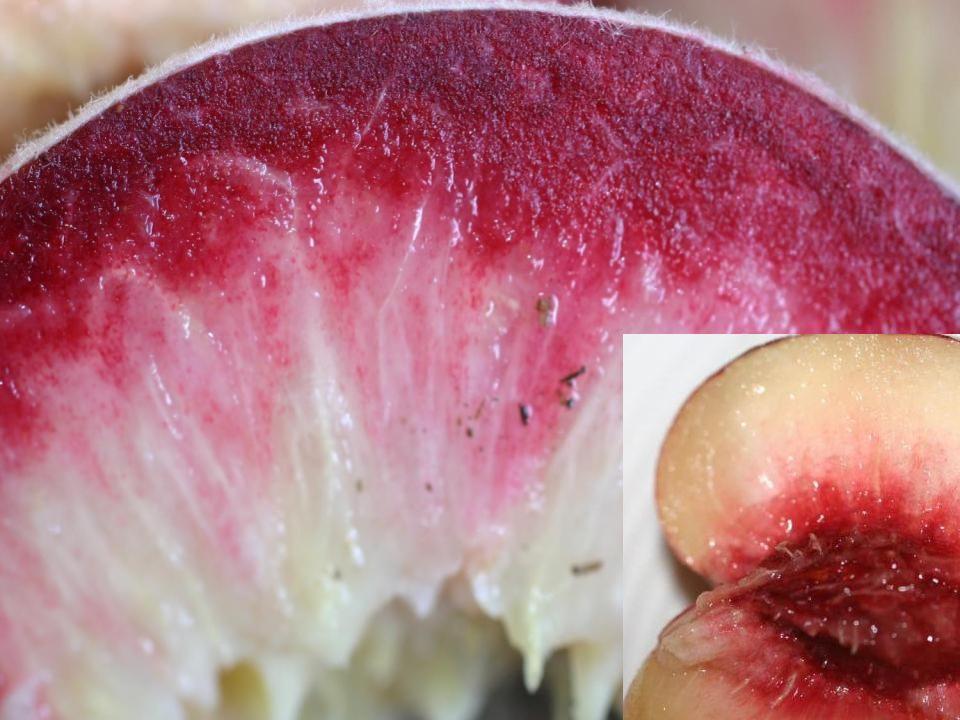 Pics white fleshed nectarines and peaches