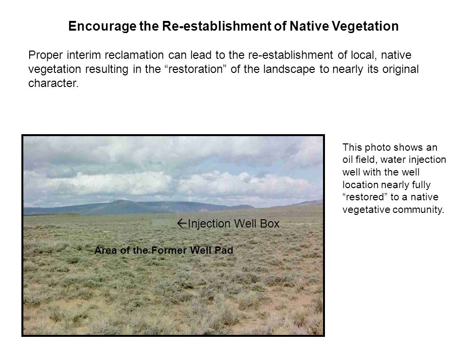 Encourage the Re-establishment of Native Vegetation Proper interim reclamation can lead to the re-establishment of local, native vegetation resulting in the restoration of the landscape to nearly its original character.