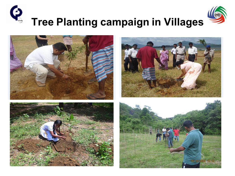 Tree Planting campaign in Villages