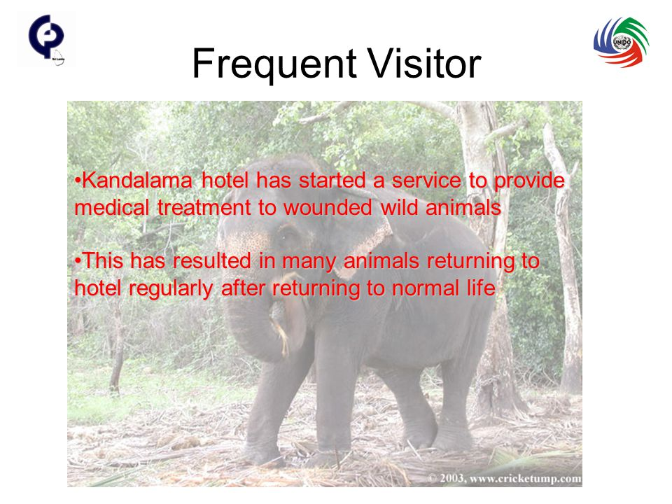 Frequent Visitor Kandalama hotel has started a service to provide medical treatment to wounded wild animalsKandalama hotel has started a service to provide medical treatment to wounded wild animals This has resulted in many animals returning to hotel regularly after returning to normal lifeThis has resulted in many animals returning to hotel regularly after returning to normal life