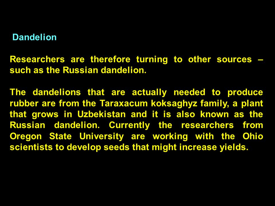 17 Dandelion Researchers are therefore turning to other sources – such as the Russian dandelion.