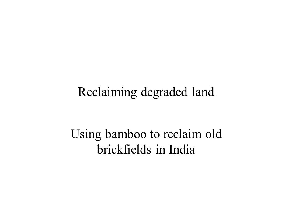 Reclaiming degraded land Using bamboo to reclaim old brickfields in India