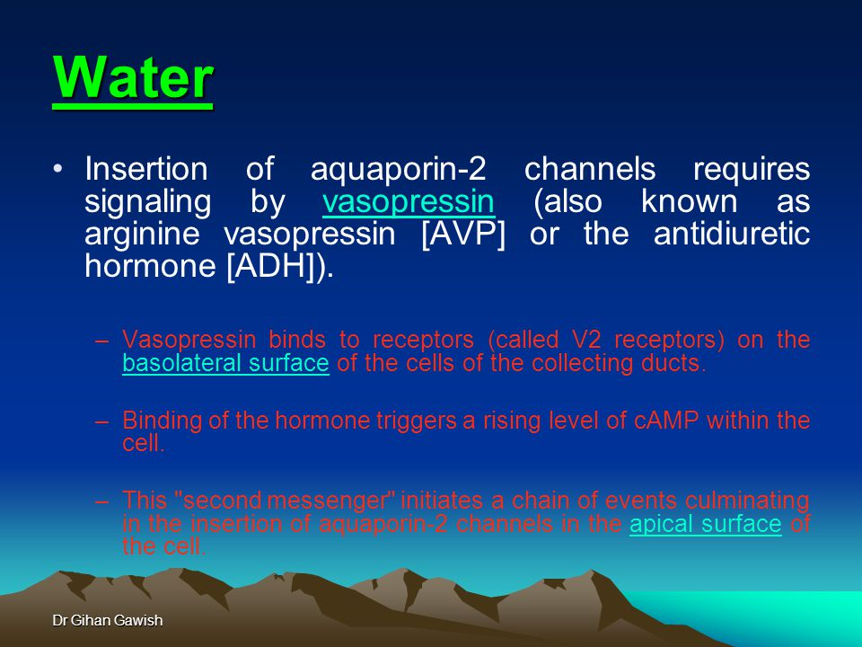 Dr Gihan Gawish Water Insertion of aquaporin-2 channels requires signaling by vasopressin (also known as arginine vasopressin [AVP] or the antidiuretic hormone [ADH]).vasopressin –Vasopressin binds to receptors (called V2 receptors) on the basolateral surface of the cells of the collecting ducts.