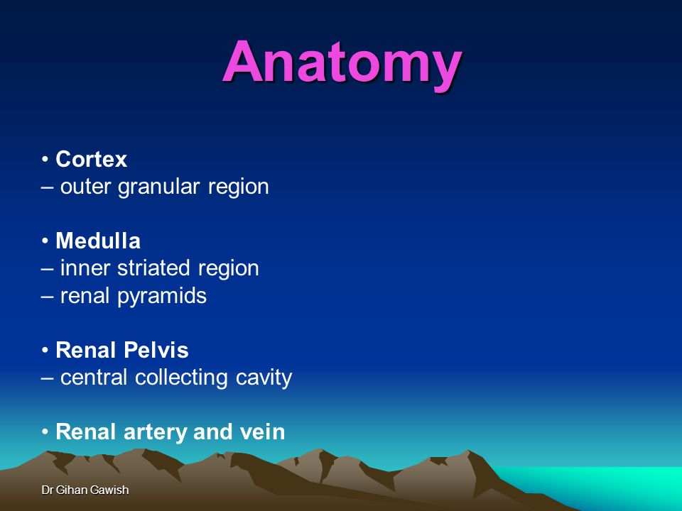 Dr Gihan Gawish Anatomy Cortex – outer granular region Medulla – inner striated region – renal pyramids Renal Pelvis – central collecting cavity Renal artery and vein