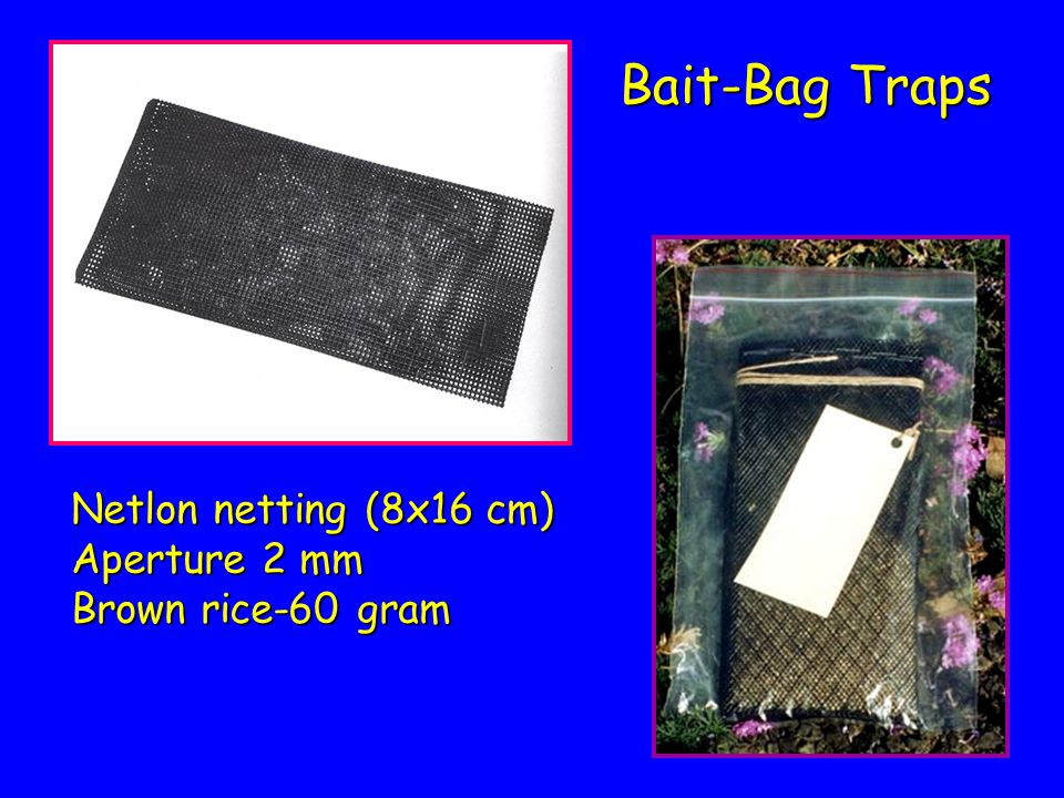 Bait-Bag Traps Netlon netting (8x16 cm) Aperture 2 mm Brown rice-60 gram