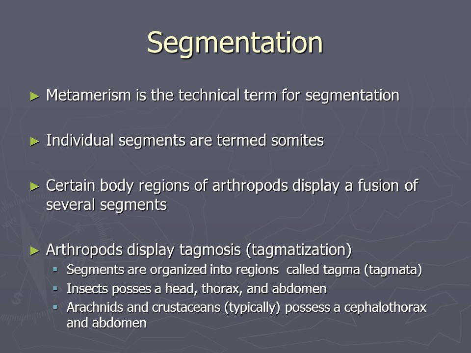 Segmentation ► Metamerism is the technical term for segmentation ► Individual segments are termed somites ► Certain body regions of arthropods display