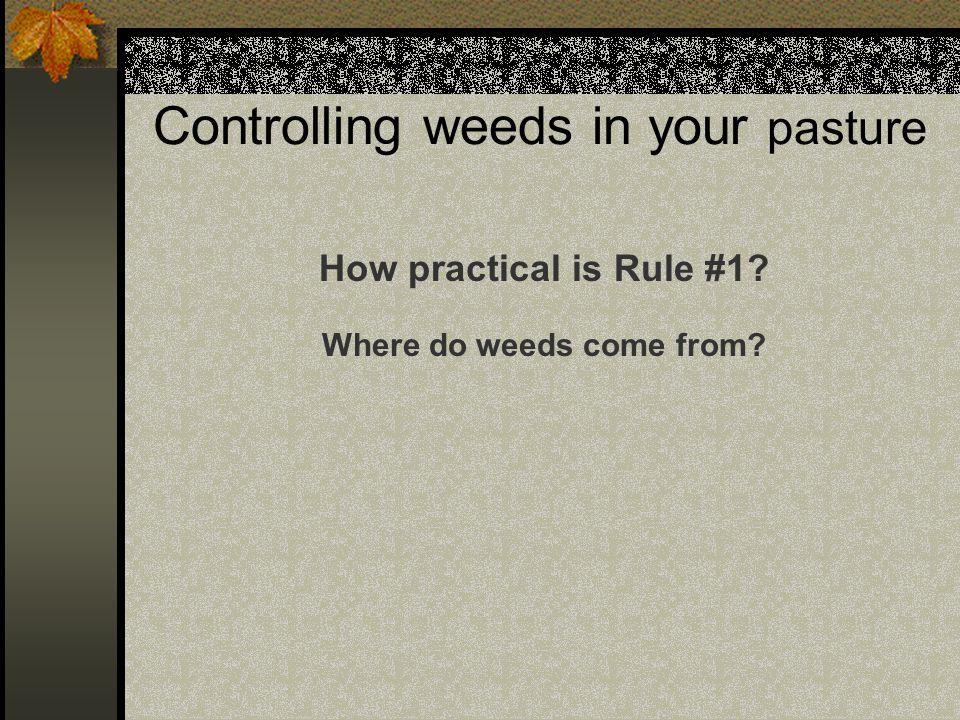 Controlling weeds in your pasture How practical is Rule #1 Where do weeds come from