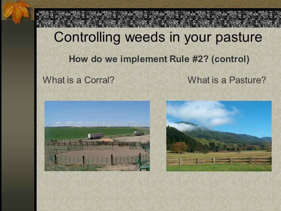 Controlling weeds in your pasture How do we implement Rule #2.