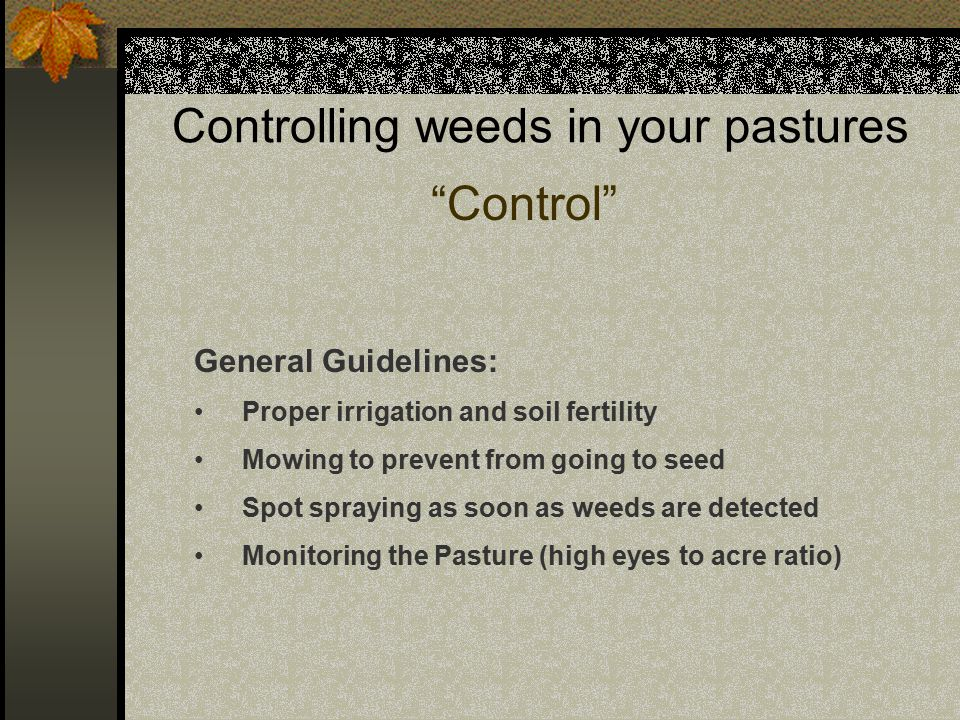 Controlling weeds in your pastures Control General Guidelines: Proper irrigation and soil fertility Mowing to prevent from going to seed Spot spraying as soon as weeds are detected Monitoring the Pasture (high eyes to acre ratio)