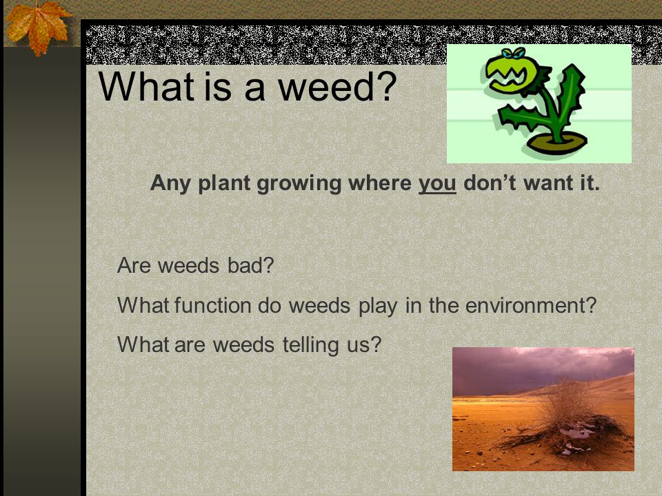 Why Worry About Weeds.They are just plants. Right.