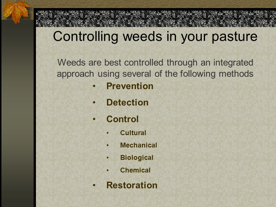 Controlling weeds in your pasture We may want something like this?