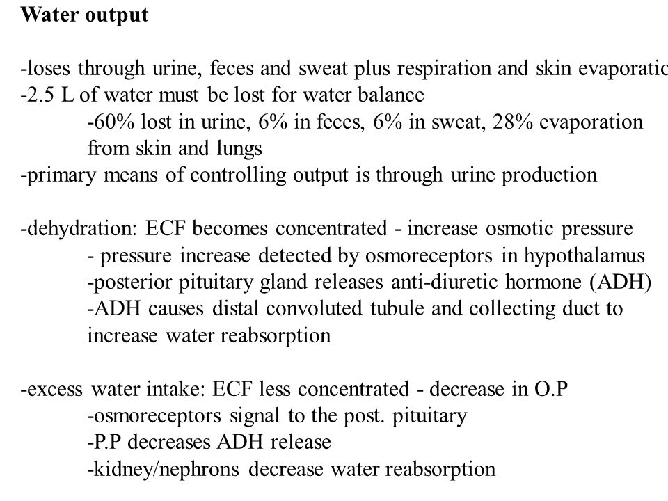 Water output -loses through urine, feces and sweat plus respiration and skin evaporation -2.5 L of water must be lost for water balance -60% lost in u