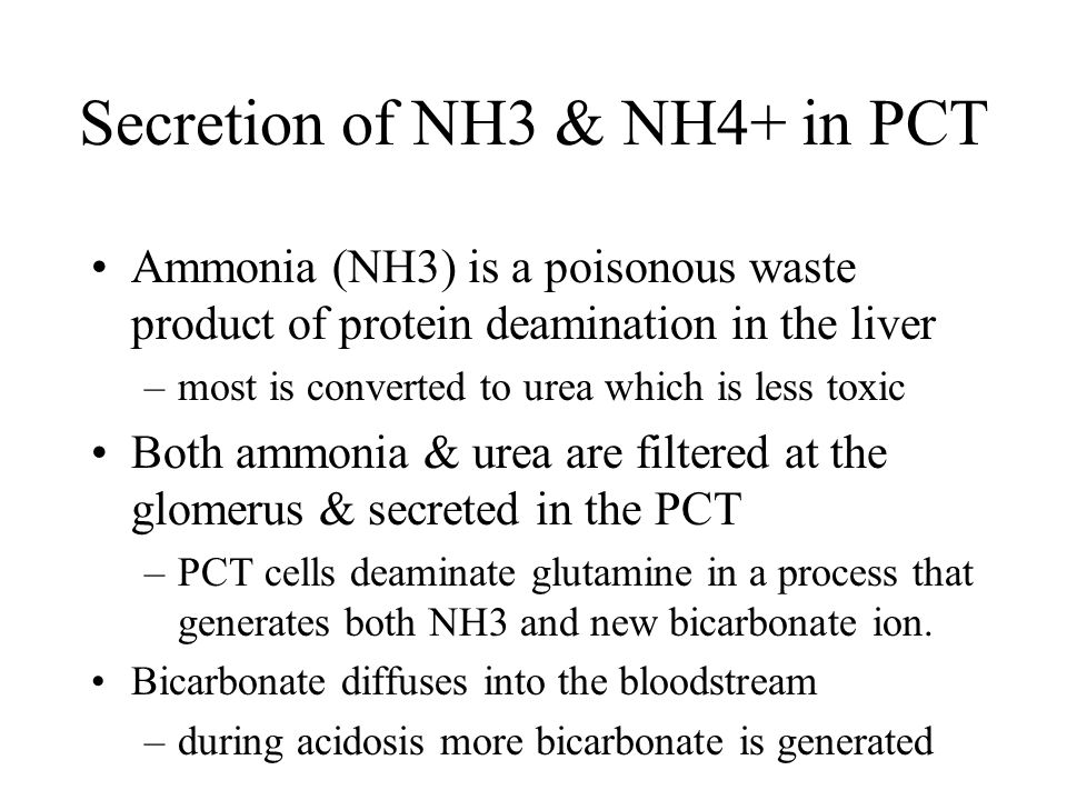 Secretion of NH3 & NH4+ in PCT Ammonia (NH3) is a poisonous waste product of protein deamination in the liver –most is converted to urea which is less
