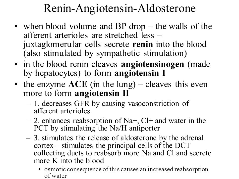Renin-Angiotensin-Aldosterone when blood volume and BP drop – the walls of the afferent arterioles are stretched less – juxtaglomerular cells secrete