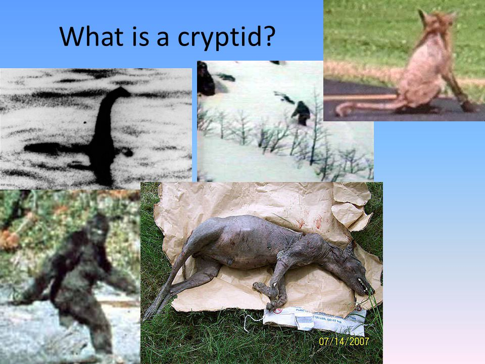What is a cryptid?