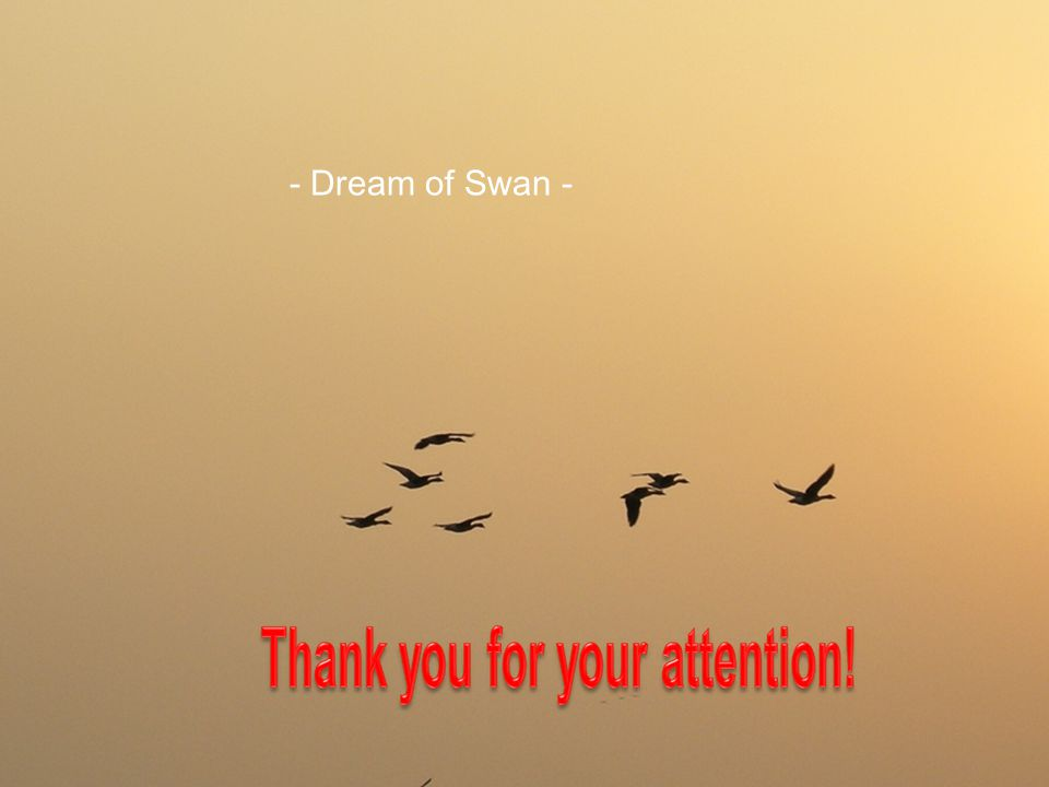 Wish the dream of swan that human and nature coexist comes true ……