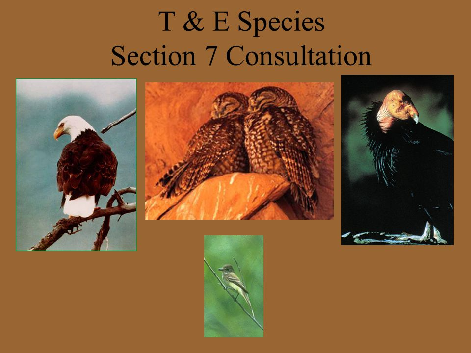 T & E Species Section 7 Consultation