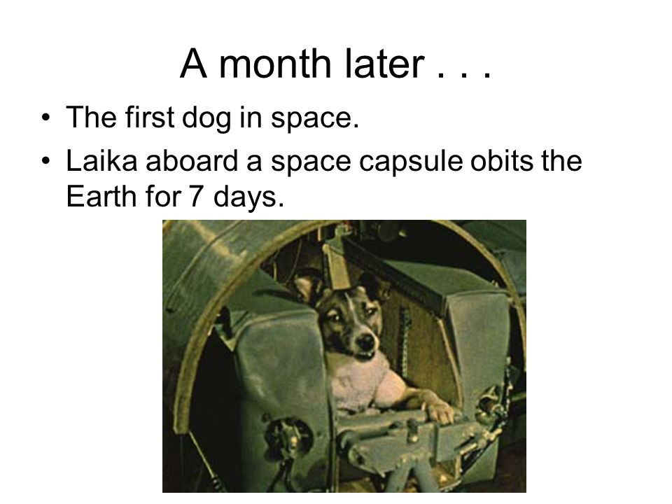 A month later... The first dog in space. Laika aboard a space capsule obits the Earth for 7 days.