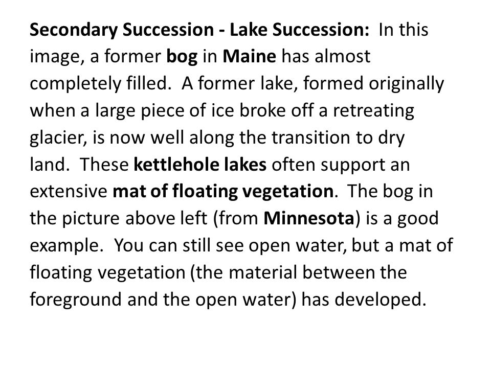 Secondary Succession - Lake Succession: In this image, a former bog in Maine has almost completely filled. A former lake, formed originally when a lar