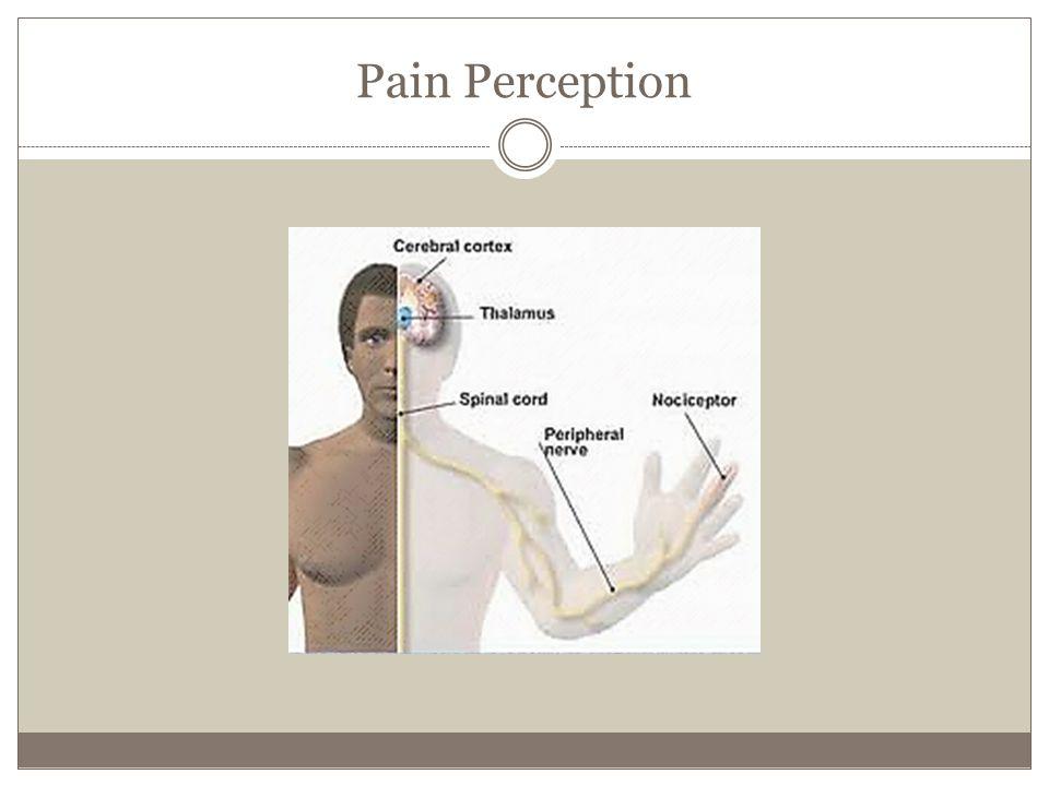 Pain Perception