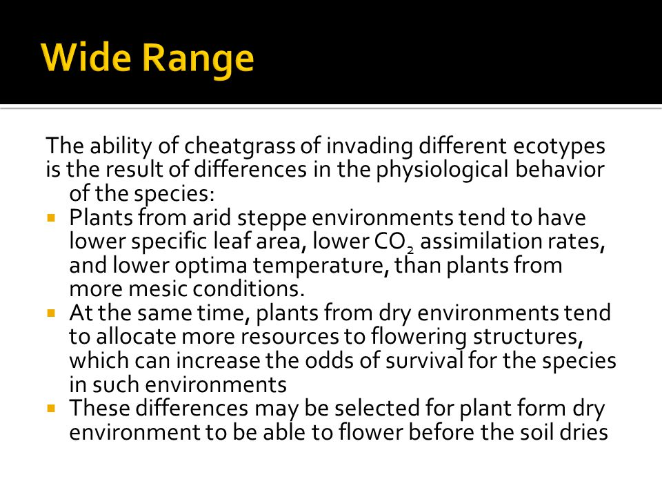 The ability of cheatgrass of invading different ecotypes is the result of differences in the physiological behavior of the species:  Plants from arid steppe environments tend to have lower specific leaf area, lower CO 2 assimilation rates, and lower optima temperature, than plants from more mesic conditions.