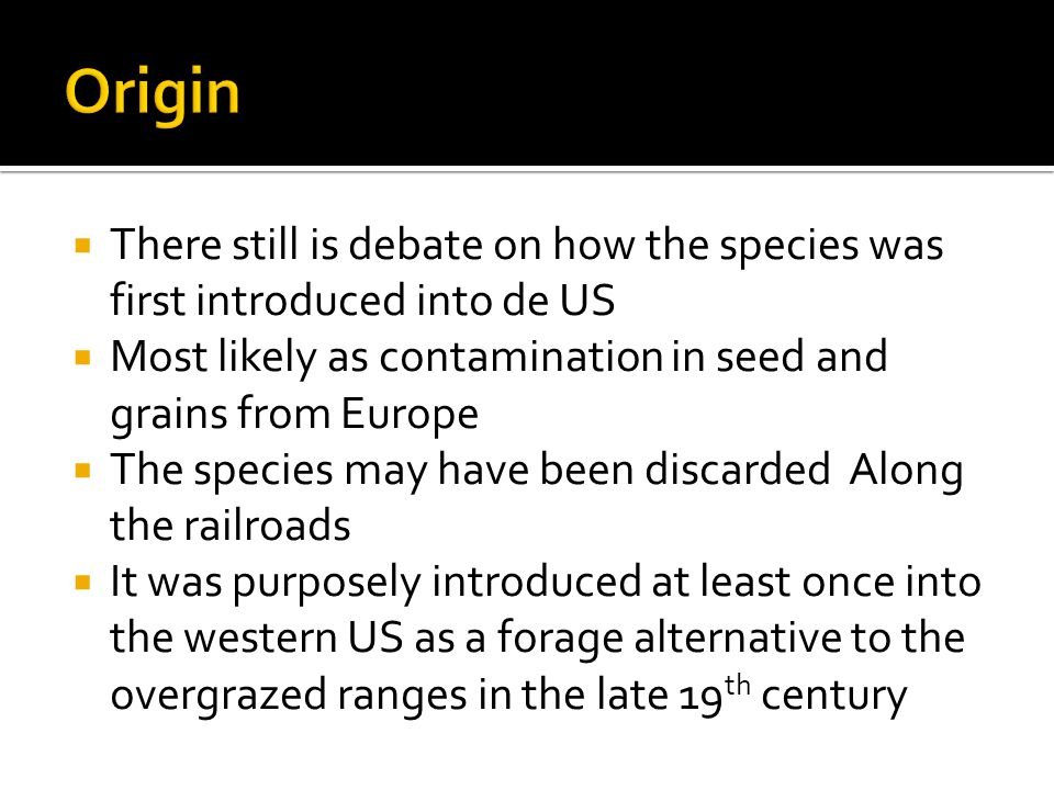  There still is debate on how the species was first introduced into de US  Most likely as contamination in seed and grains from Europe  The species may have been discarded Along the railroads  It was purposely introduced at least once into the western US as a forage alternative to the overgrazed ranges in the late 19 th century