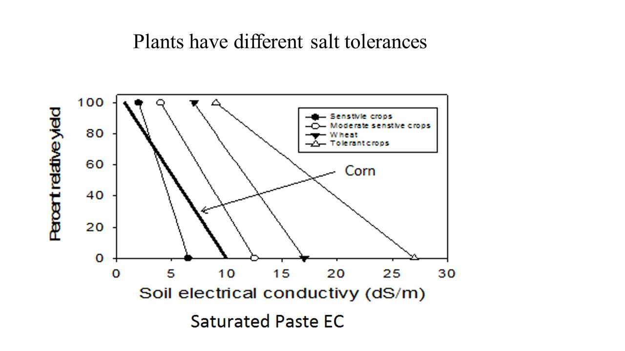 Plants have different salt tolerances