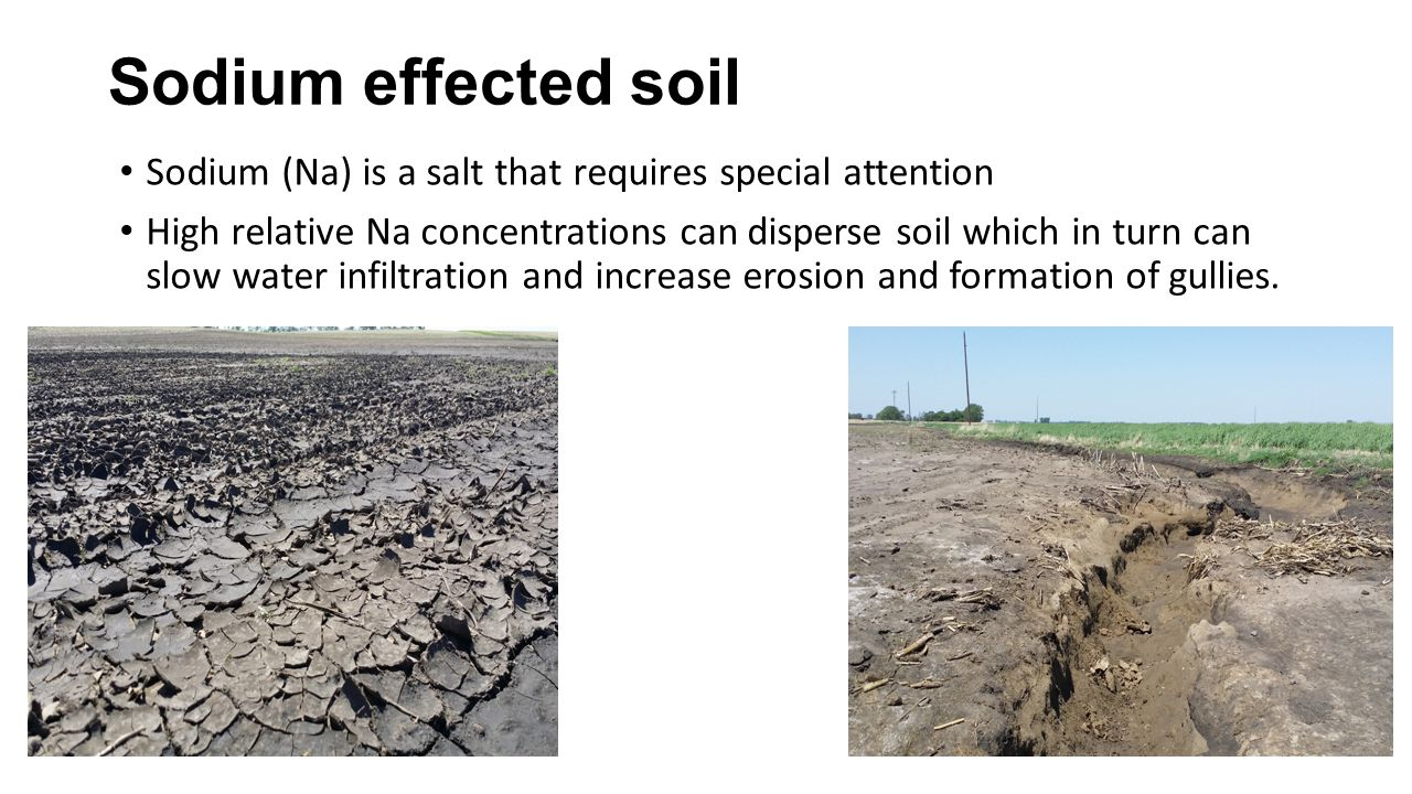 Sodium effected soil Sodium (Na) is a salt that requires special attention High relative Na concentrations can disperse soil which in turn can slow wa
