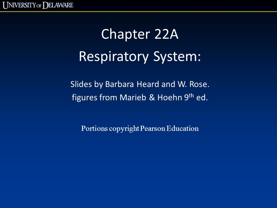 © 2013 Pearson Education, Inc.Figure 22.3b The upper respiratory tract.