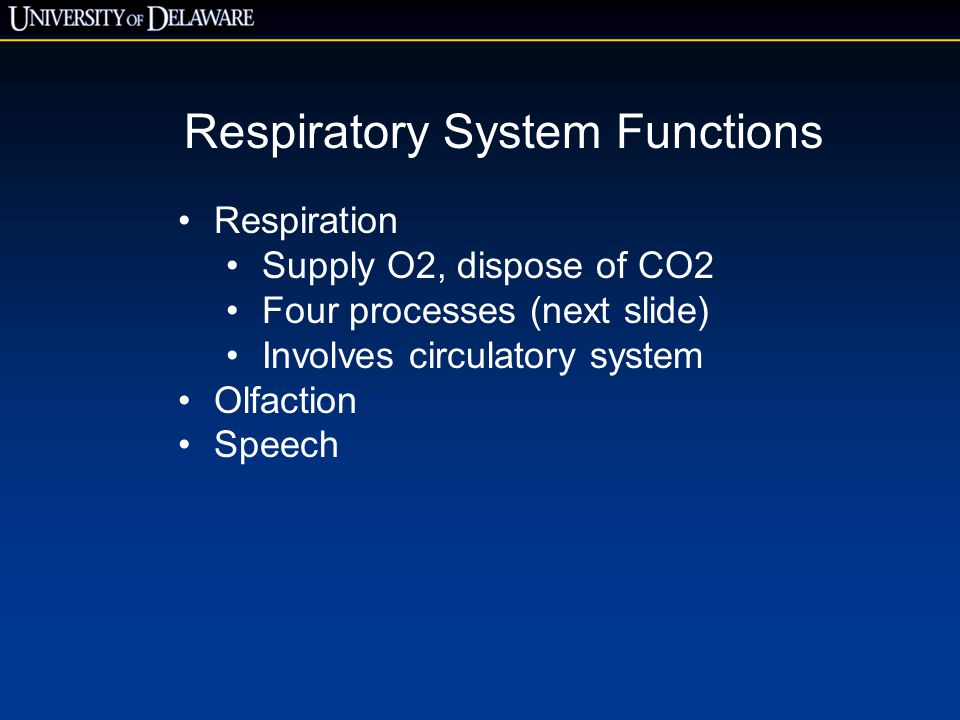Respiratory System Functions Respiration Supply O2, dispose of CO2 Four processes (next slide) Involves circulatory system Olfaction Speech
