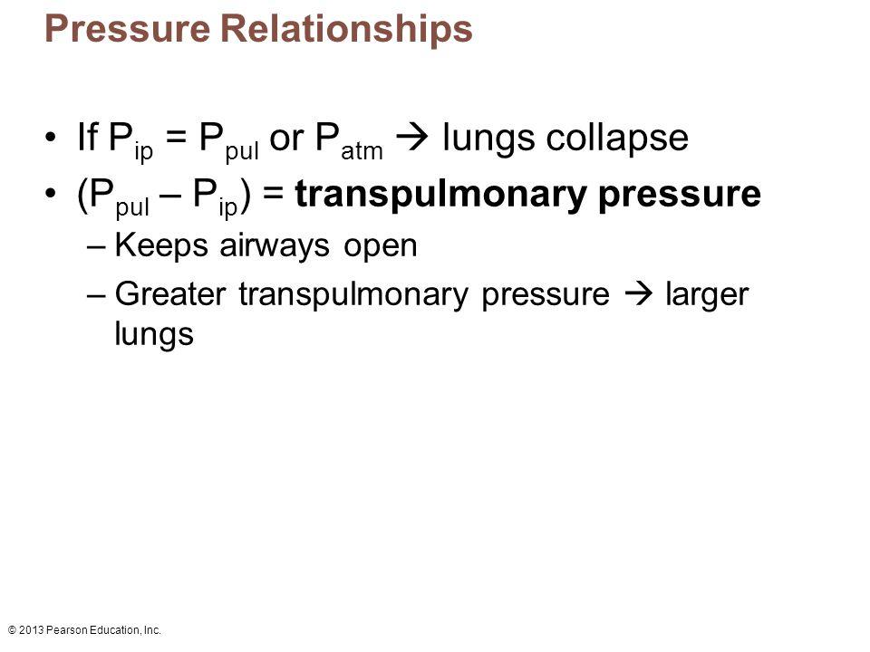 © 2013 Pearson Education, Inc. Pressure Relationships If P ip = P pul or P atm  lungs collapse (P pul – P ip ) = transpulmonary pressure –Keeps airwa