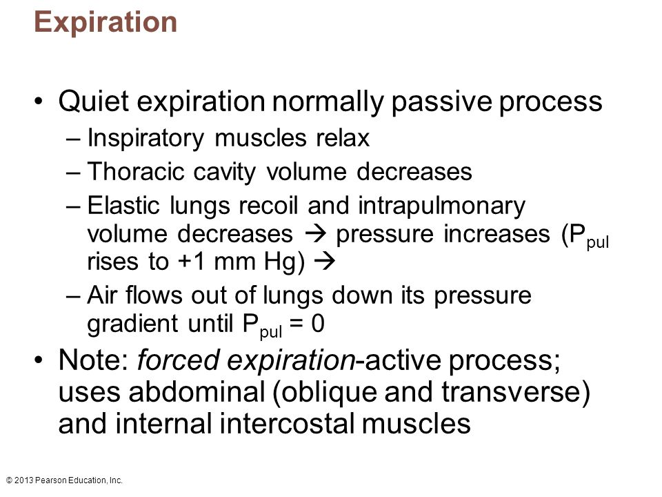© 2013 Pearson Education, Inc. Expiration Quiet expiration normally passive process –Inspiratory muscles relax –Thoracic cavity volume decreases –Elas