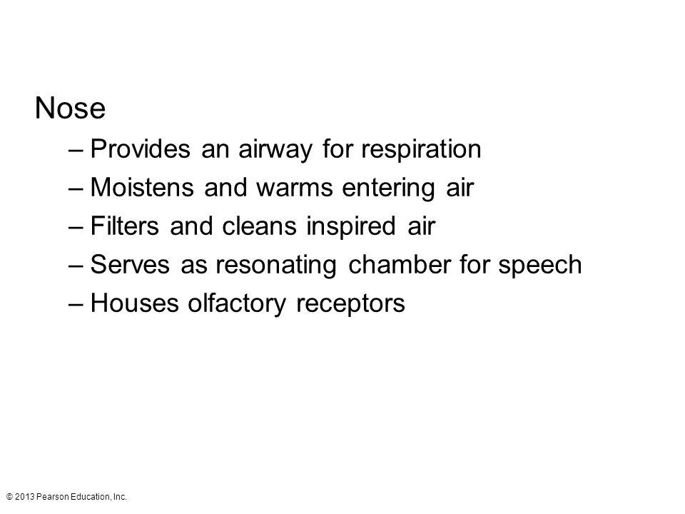 © 2013 Pearson Education, Inc.Figure 22.2b The external nose.