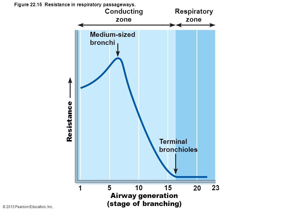 © 2013 Pearson Education, Inc. Conducting zone Respiratory zone Medium-sized bronchi Resistance Terminal bronchioles 1 51015 20 23 Airway generation (
