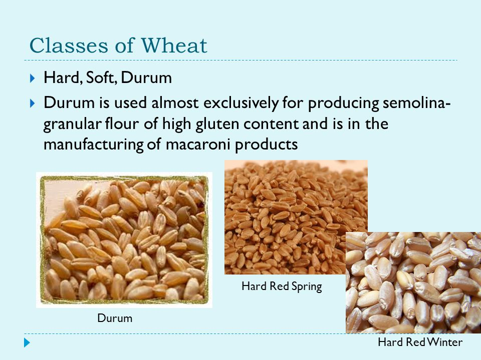 Classes of Wheat  Hard, Soft, Durum  Durum is used almost exclusively for producing semolina- granular flour of high gluten content and is in the manufacturing of macaroni products Durum Hard Red Spring Hard Red Winter