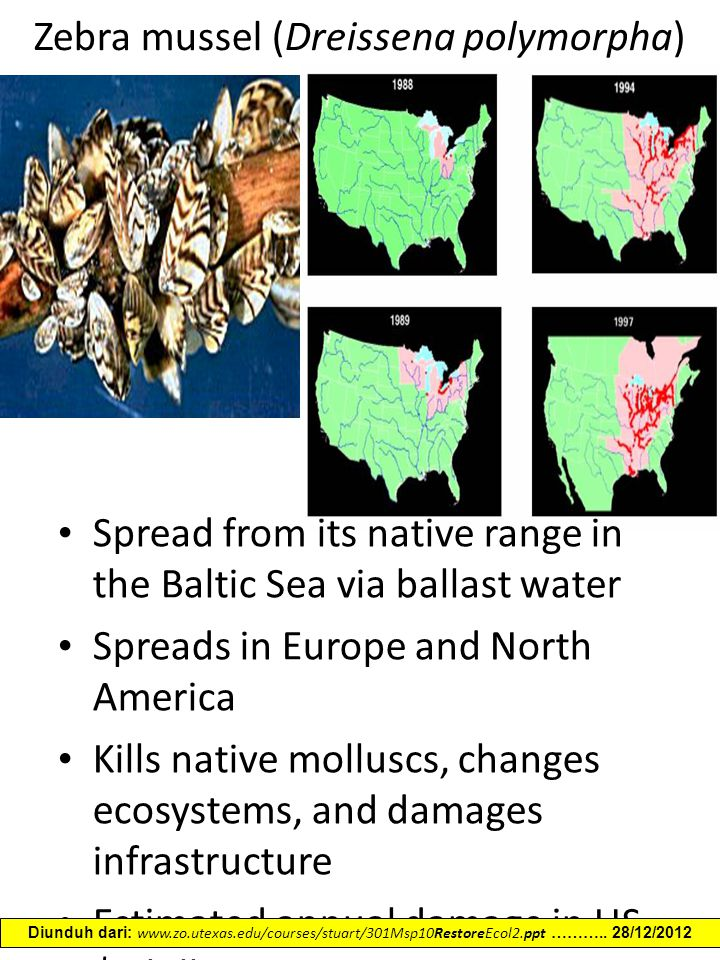 Zebra mussel (Dreissena polymorpha) Spread from its native range in the Baltic Sea via ballast water Spreads in Europe and North America Kills native molluscs, changes ecosystems, and damages infrastructure Estimated annual damage in US $3 billion Napela T.F., Schloesser, D.W., 1992 Diunduh dari: www.zo.utexas.edu/courses/stuart/301Msp10RestoreEcol2.ppt ………..