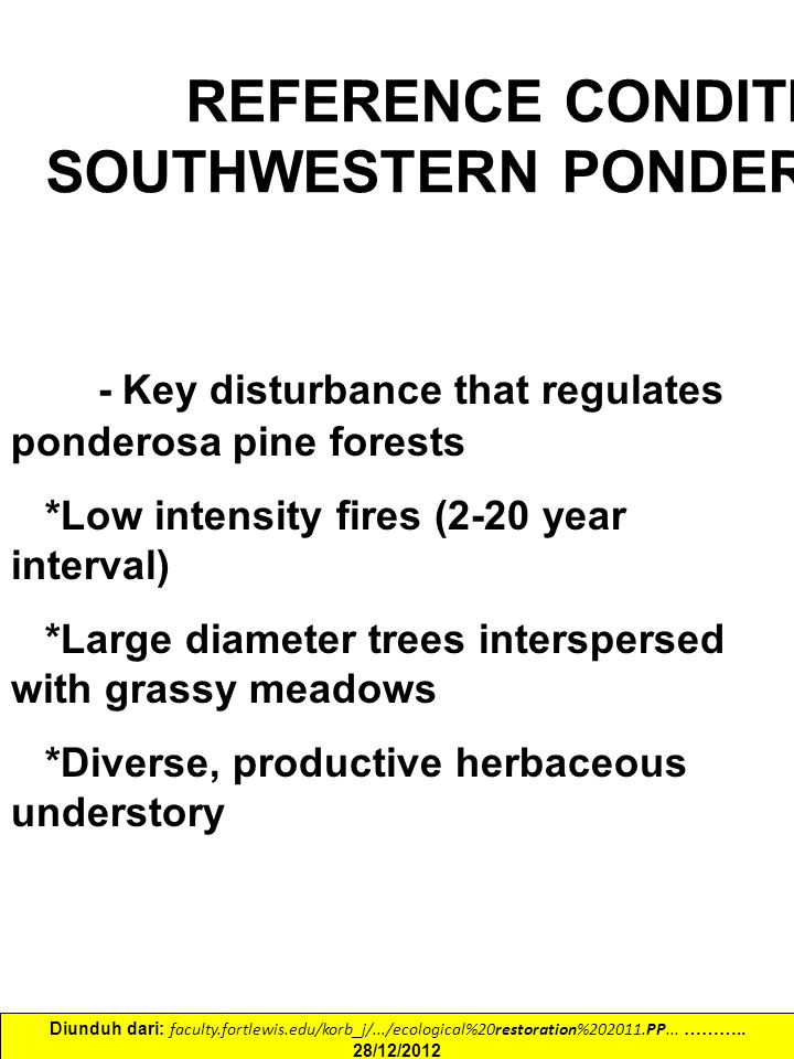REFERENCE CONDITIONS SOUTHWESTERN PONDEROSA PINE Fire - Key disturbance that regulates ponderosa pine forests *Low intensity fires (2-20 year interval) *Large diameter trees interspersed with grassy meadows *Diverse, productive herbaceous understory Diunduh dari: faculty.fortlewis.edu/korb_j/.../ecological%20restoration%202011.PP...