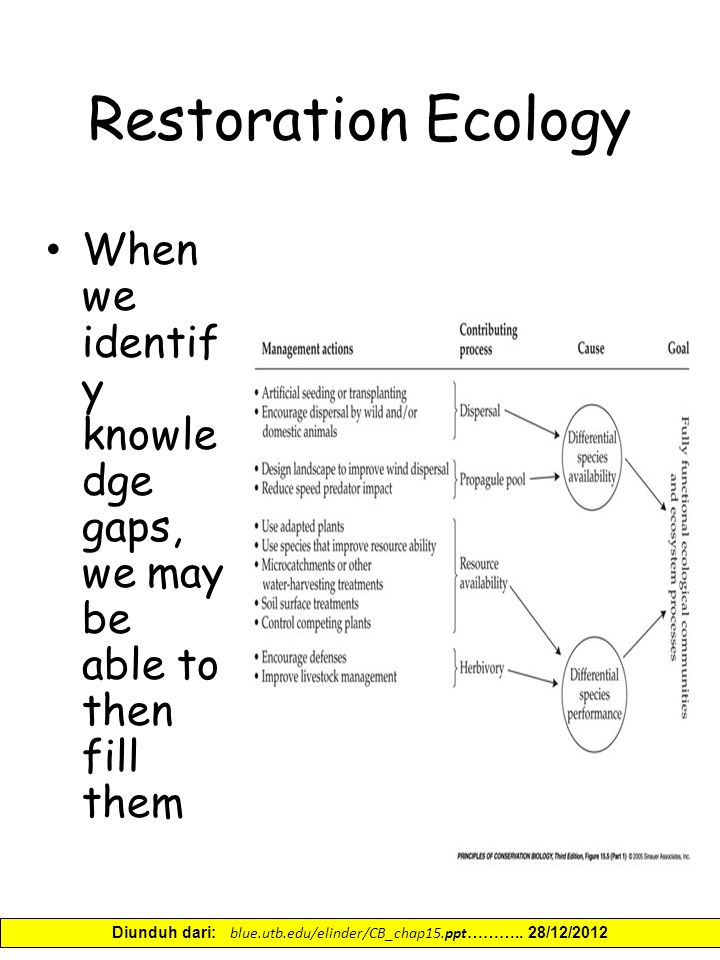 Restoration Ecology When we identif y knowle dge gaps, we may be able to then fill them Diunduh dari: blue.utb.edu/elinder/CB_chap15.ppt ………..