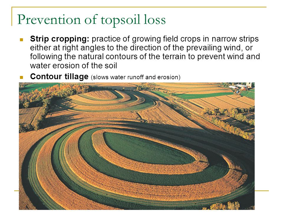 Prevention of topsoil loss Strip cropping: practice of growing field crops in narrow strips either at right angles to the direction of the prevailing wind, or following the natural contours of the terrain to prevent wind and water erosion of the soil Contour tillage (slows water runoff and erosion)
