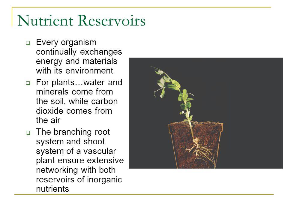 Nutrient Reservoirs  Every organism continually exchanges energy and materials with its environment  For plants…water and minerals come from the soil, while carbon dioxide comes from the air  The branching root system and shoot system of a vascular plant ensure extensive networking with both reservoirs of inorganic nutrients