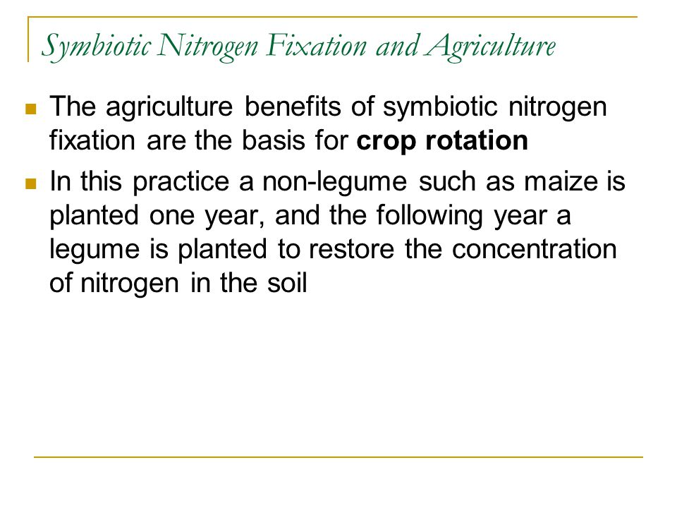 Symbiotic Nitrogen Fixation and Agriculture The agriculture benefits of symbiotic nitrogen fixation are the basis for crop rotation In this practice a non-legume such as maize is planted one year, and the following year a legume is planted to restore the concentration of nitrogen in the soil
