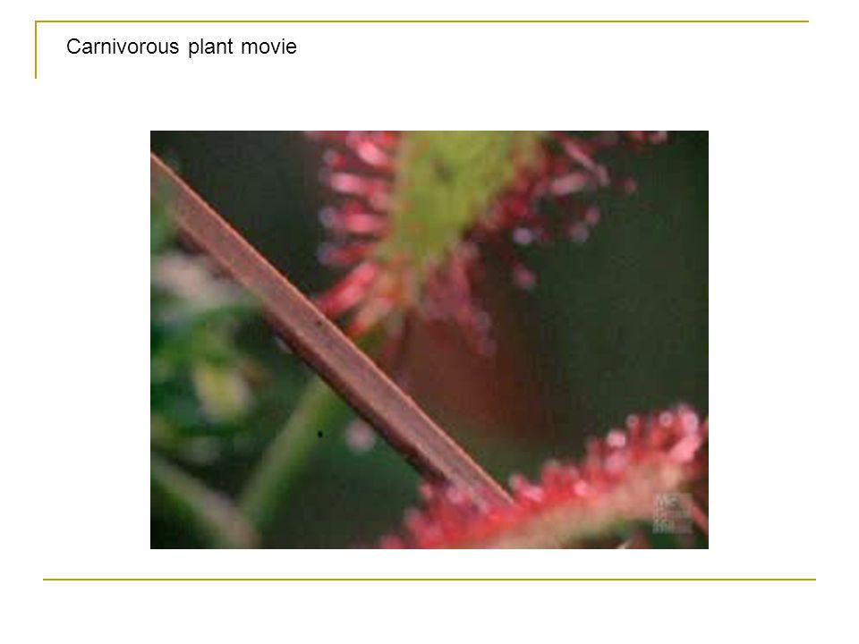 Carnivorous plant movie