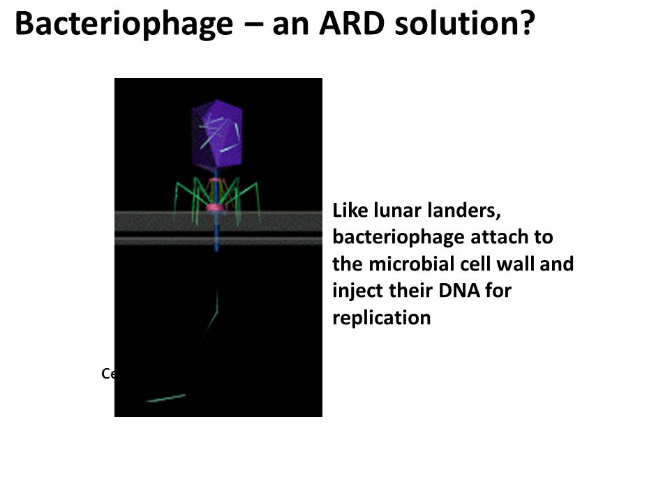 Bacteriophage – an ARD solution? Like lunar landers, bacteriophage attach to the microbial cell wall and inject their DNA for replication Cell Wall