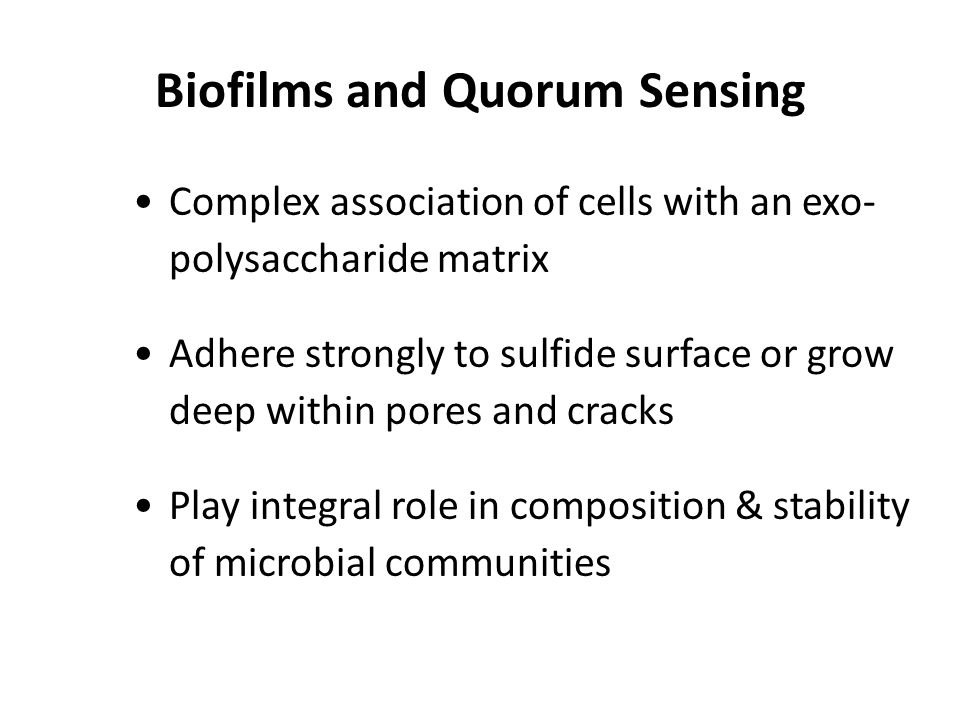 Biofilms and Quorum Sensing Complex association of cells with an exo- polysaccharide matrix Adhere strongly to sulfide surface or grow deep within por
