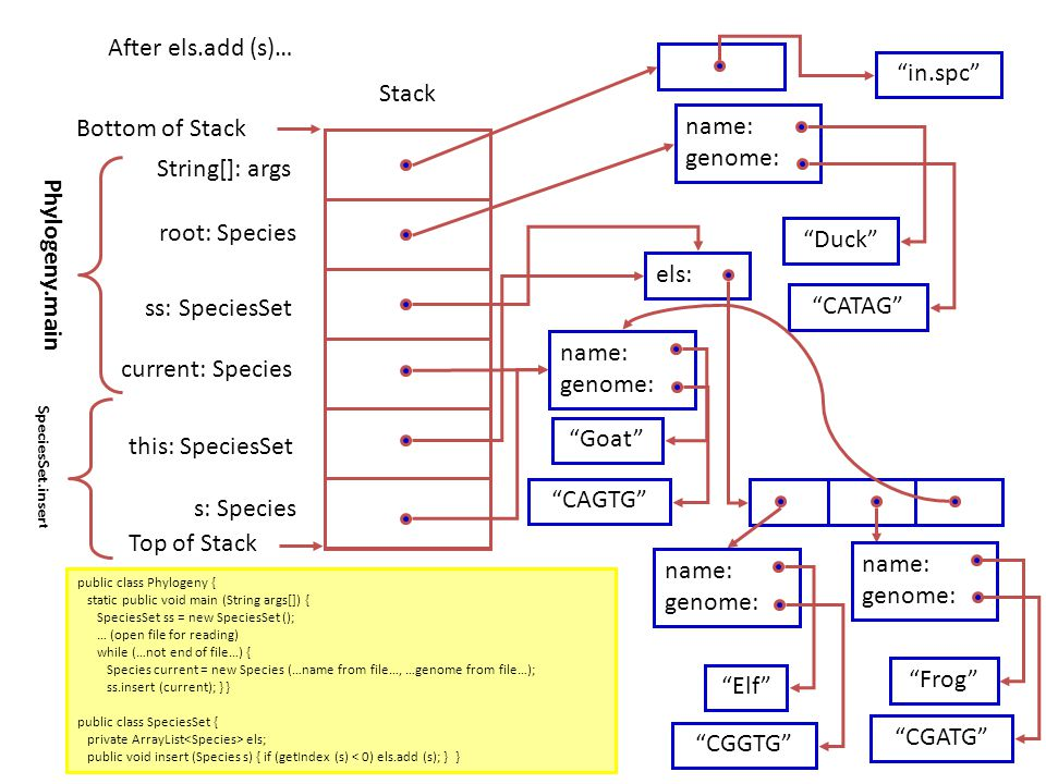 Stack Top of Stack Bottom of Stack Phylogeny.main Duck CATAG root: Species name: genome: String[]: args ss: SpeciesSet in.spc els: current: Species Goat CAGTG name: genome: Elf CGGTG name: genome: Frog CGATG name: genome: SpeciesSet.inser t this: SpeciesSet s: Species After els.add (s)… public class Phylogeny { static public void main (String args[]) { SpeciesSet ss = new SpeciesSet (); … (open file for reading) while (…not end of file…) { Species current = new Species (…name from file…, …genome from file…); ss.insert (current); } } public class SpeciesSet { private ArrayList els; public void insert (Species s) { if (getIndex (s) < 0) els.add (s); } }