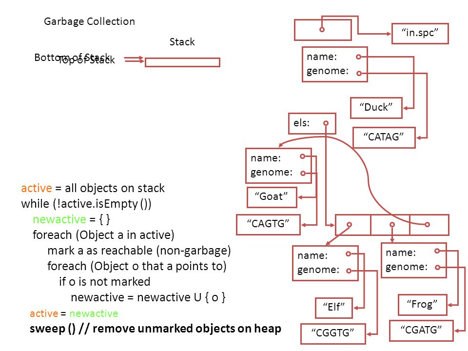 Stack Bottom of Stack Duck CATAG name: genome: in.spc els: Goat CAGTG name: genome: Elf CGGTG name: genome: Frog CGATG name: genome: Garbage Collection Top of Stack active = all objects on stack while (!active.isEmpty ()) newactive = { } foreach (Object a in active) mark a as reachable (non-garbage) foreach (Object o that a points to) if o is not marked newactive = newactive U { o } active = newactive sweep () // remove unmarked objects on heap